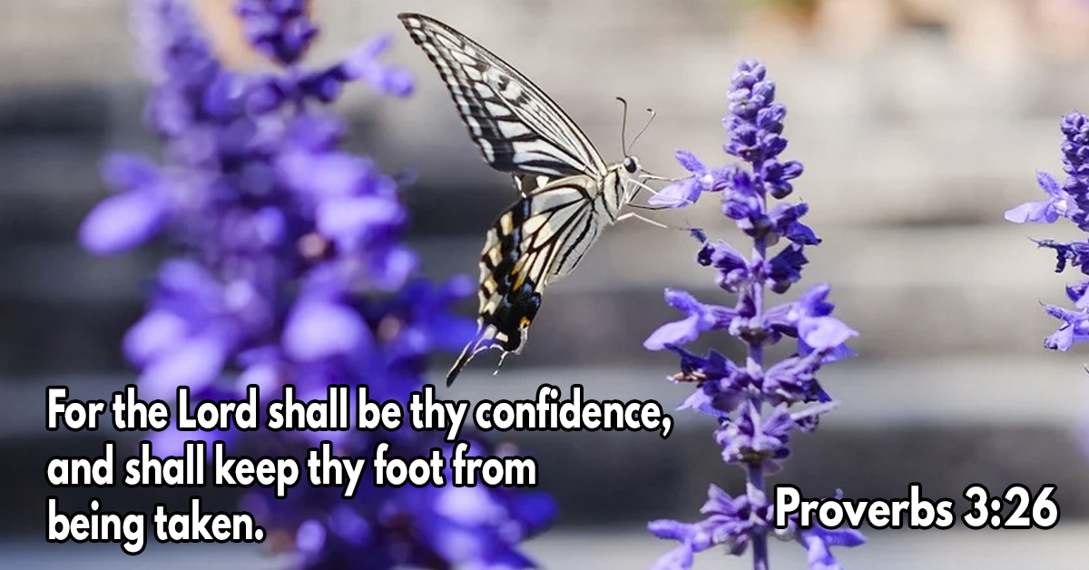 For the Lord shall be thy confidence, and shall keep thy foot from being taken 2